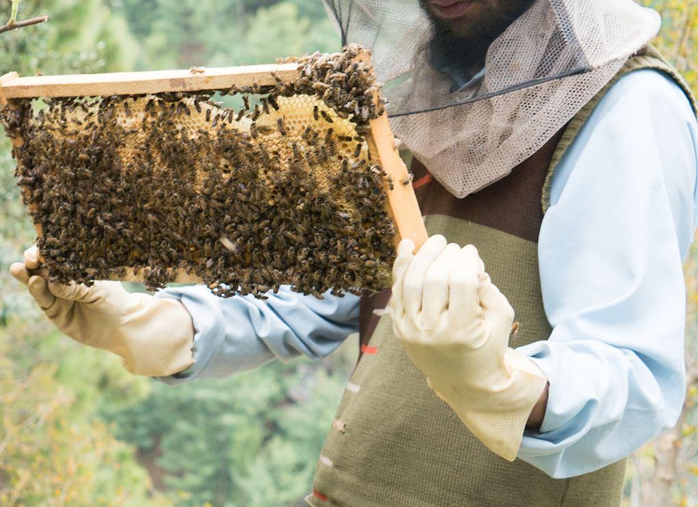 مزرعة نحل العسل
